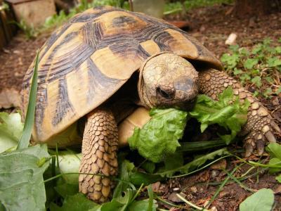 Aae associazione animali esotici for Vasche da giardino per tartarughe