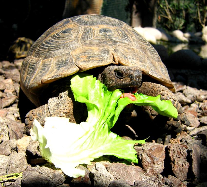 Storie di tartarughe e altri strani amici for Cerco acquario per tartarughe