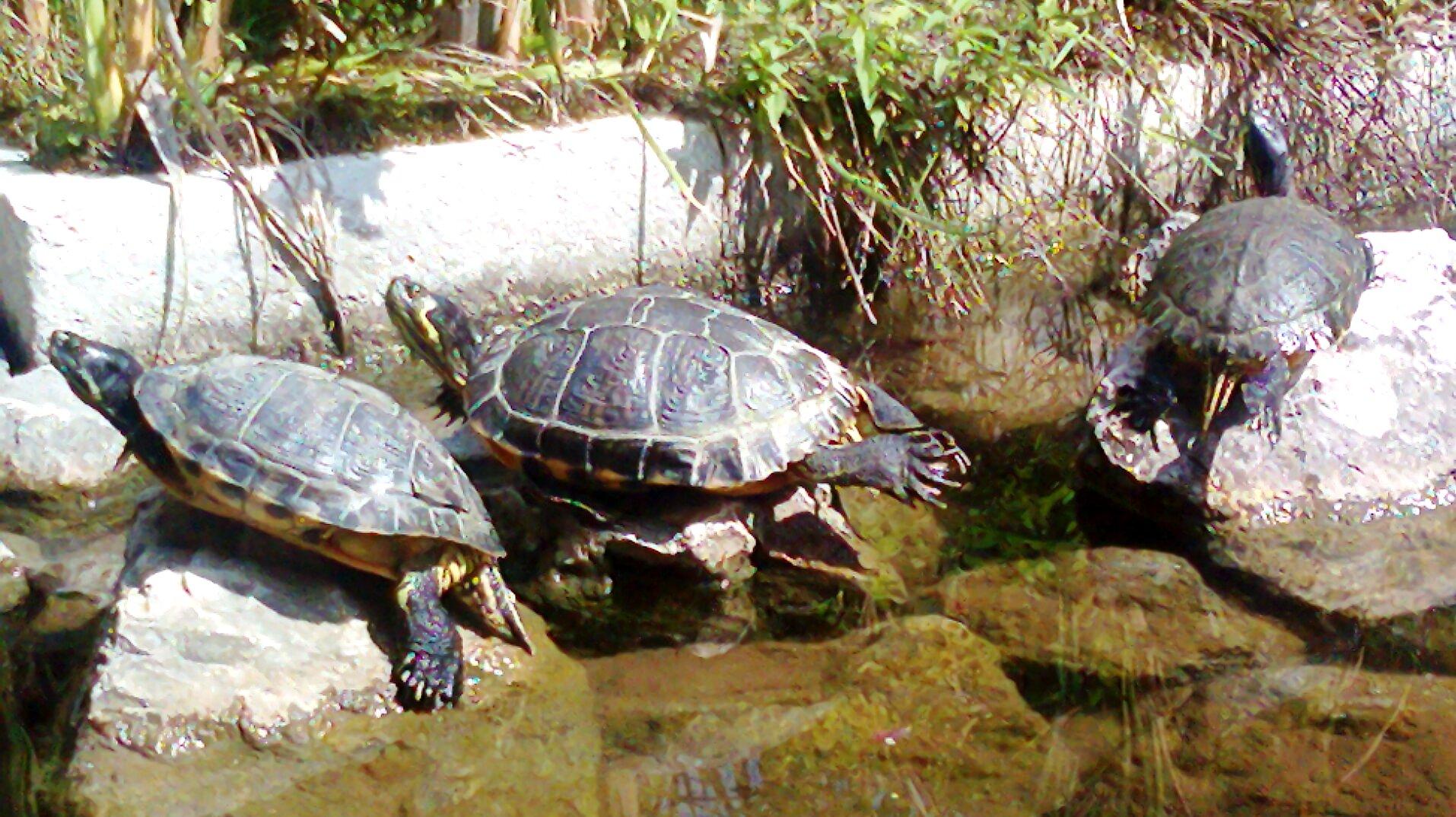 Storie di tartarughe e altri strani amici for Lago per tartarughe
