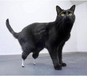 """Oscar, primo """"gatto bionico"""""""