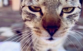 Gatti e raffreddore