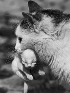 Sterilizzare i gatti: una scelta etica e responsabile.