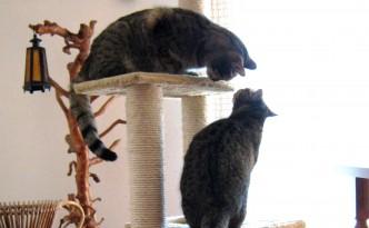 gatto nuovo evid