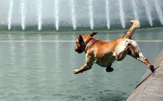 cane acqua evid