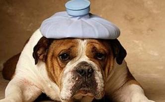 cane malato evid