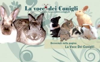 la voce dei conigli evid