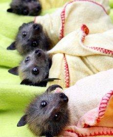 Pipistrelli in difficoltà