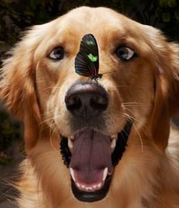 cane farfalla