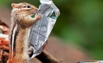 scoiattolo cibo evid