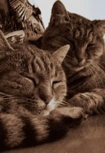 Minni e Micia