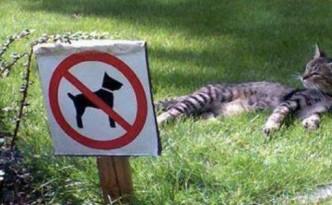 gatto divieto evid
