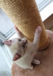 Tiragraffi e comunicazione felina