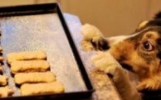 cane biscotti evid