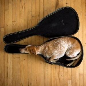 cane chitarra