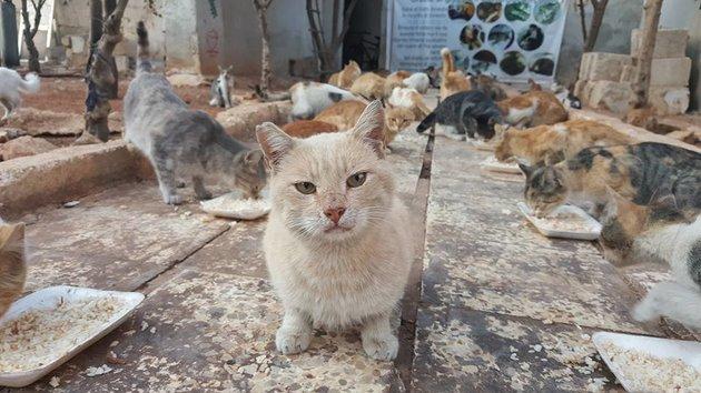 Gatti al rifugio Ernesto - Foto di Mohammad Alaa Aljaleel